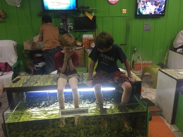 The fish spa!
