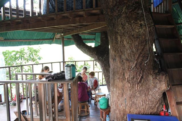 Around the treehouse.