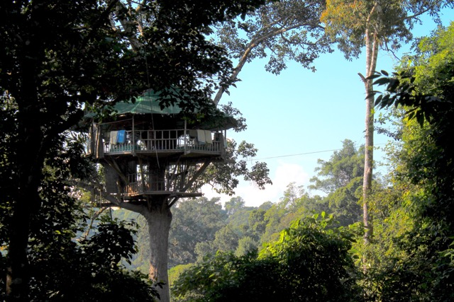 The treehouse we slept in.