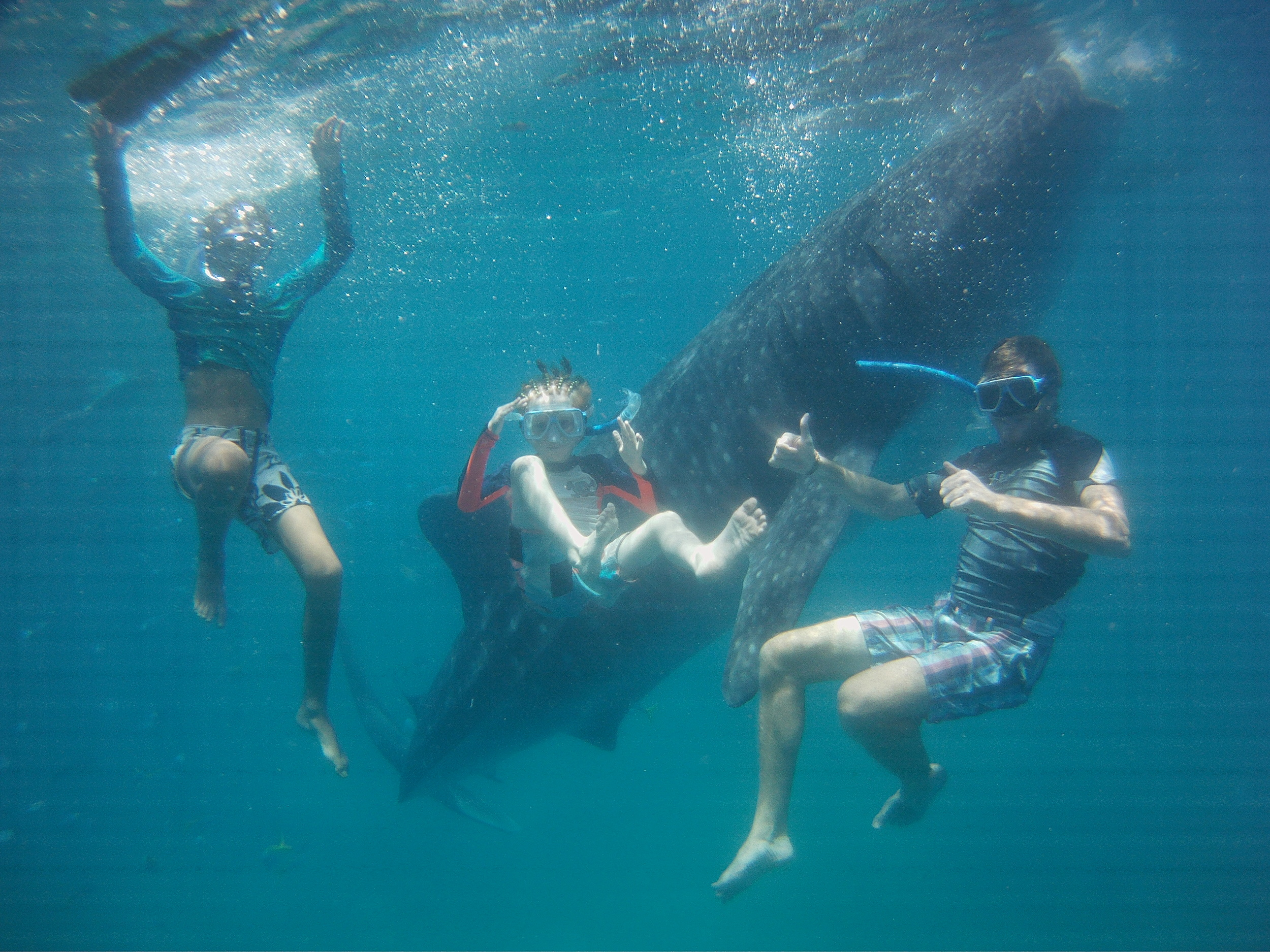 Whaleshark 2.jpg