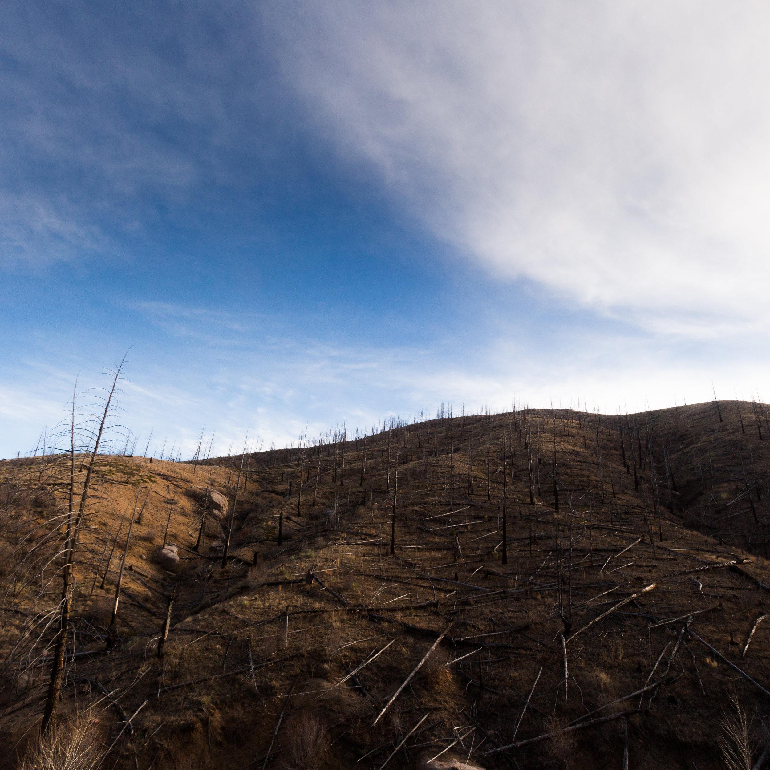 Pike_National_Forest_Fire-4119.jpg