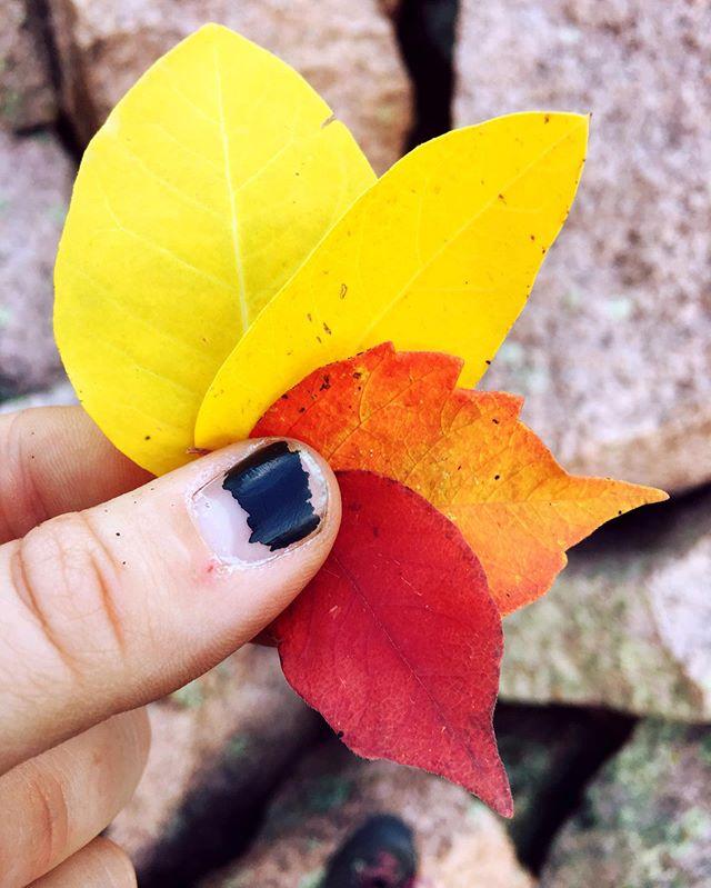 #fallisintheair #coloradocolors #crispautumnair #mostwonderfultimeoftheyear