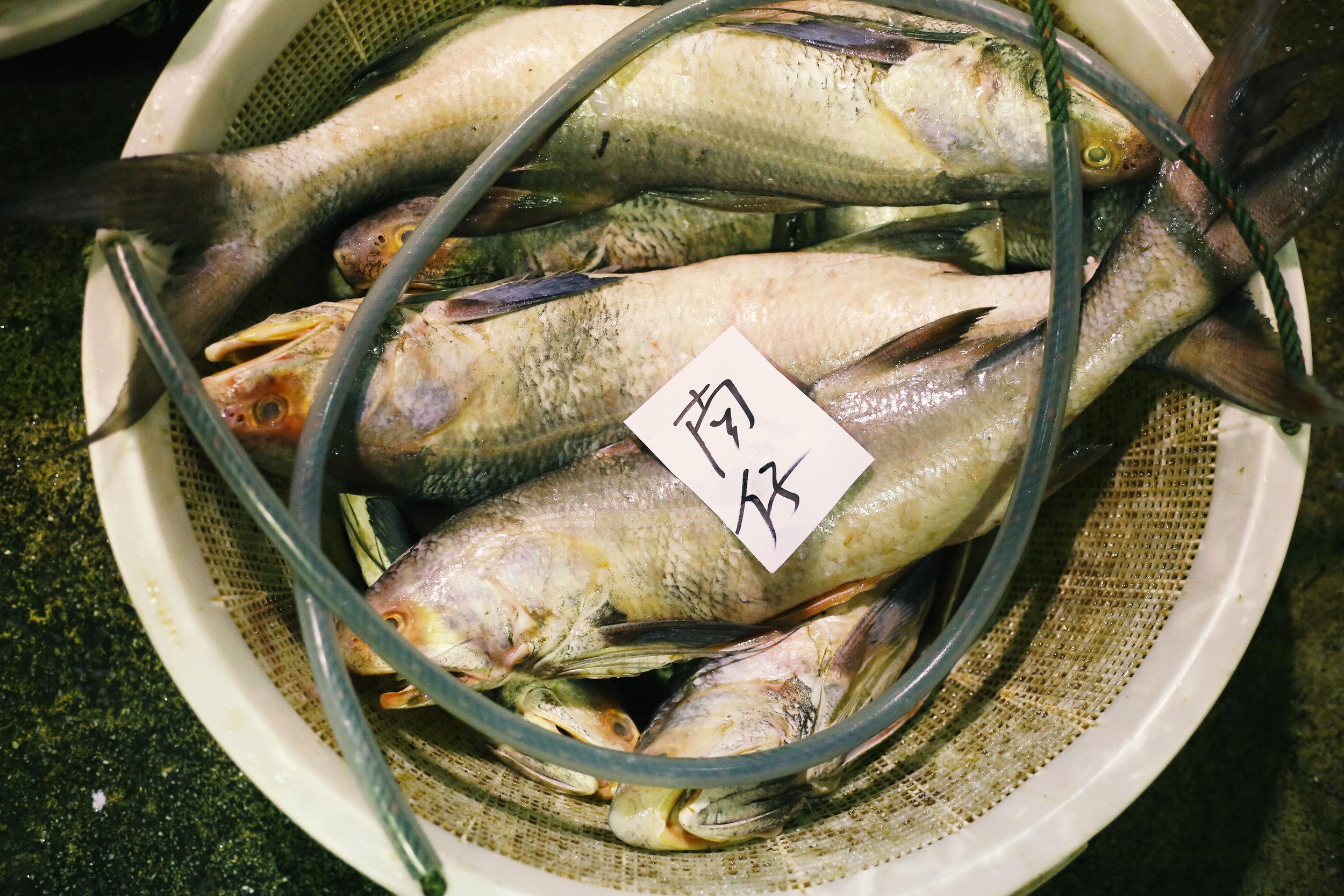 JurongFishMarket_5.jpg