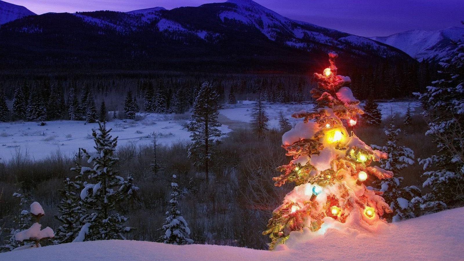 holiday-christmas-tree-colored-lantern-snow-mountain-night-1600x900.jpg