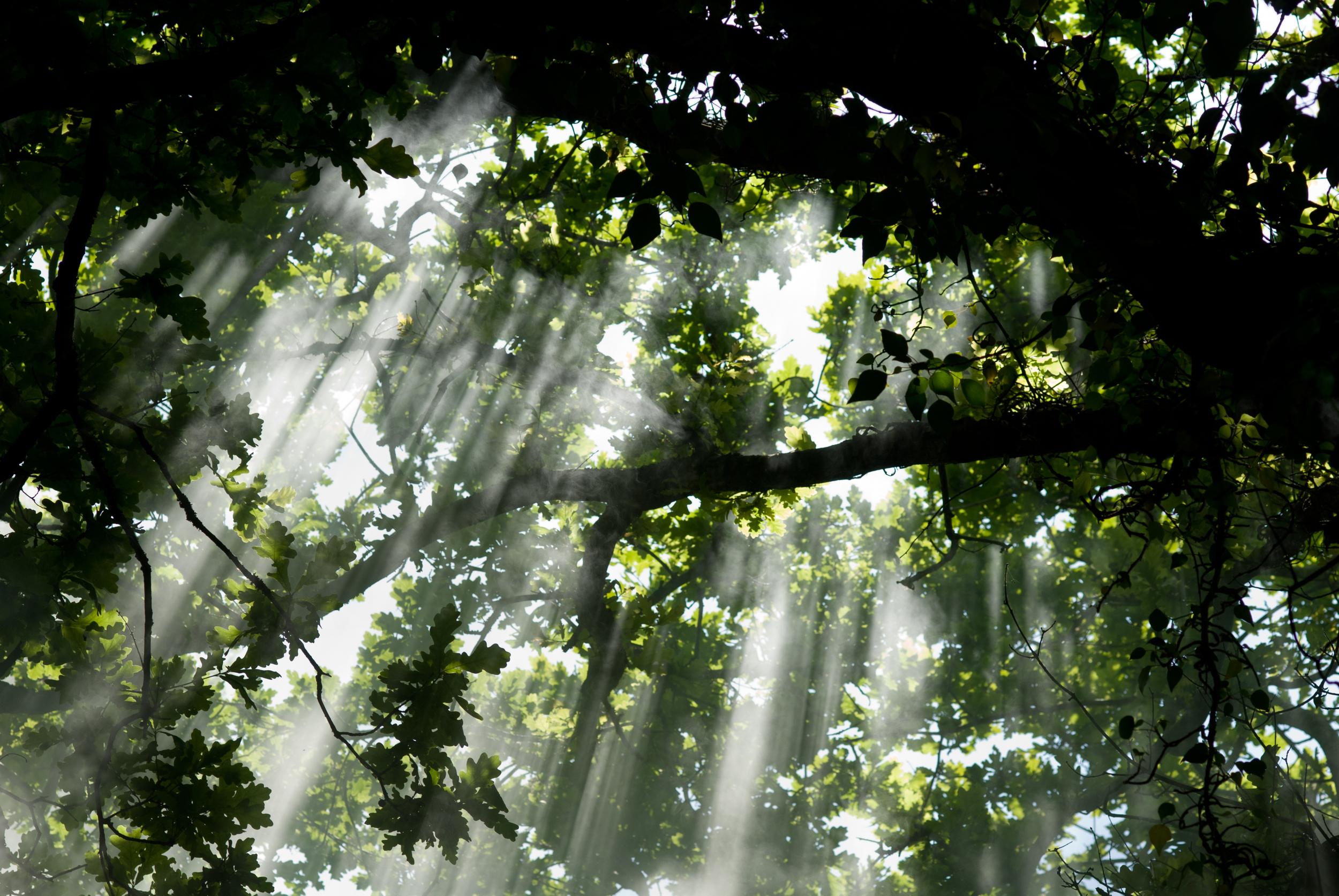 spiritual healing theta healing divine light