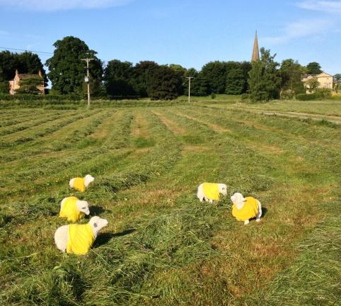 lost-sheep-yorkshire-dales.jpg