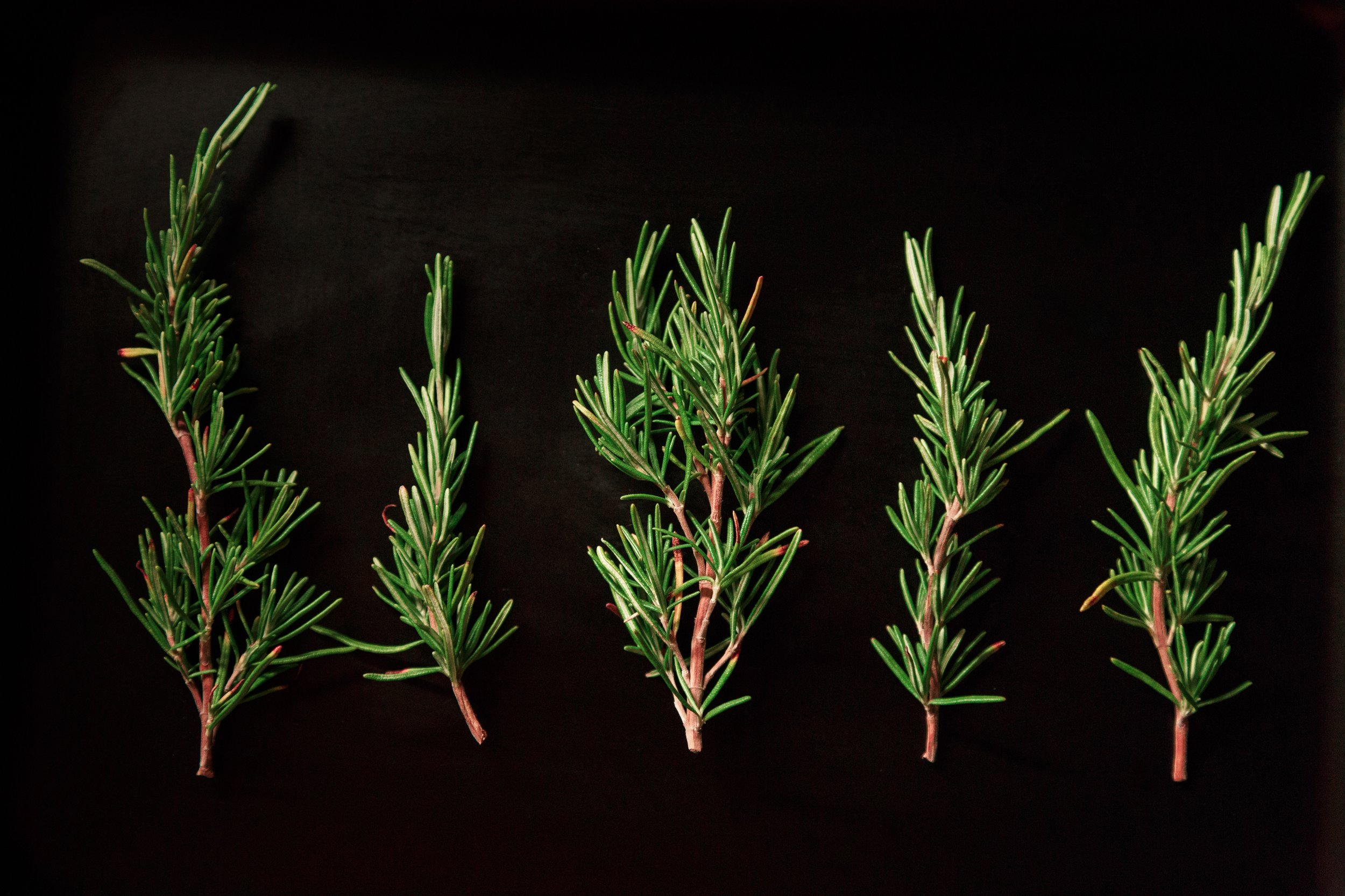 A study conducted by the  Egyptian Journal of Basic and Applied Science  found that inhaling the scent of rosemary increased productivity and improved visual and numerical memory.