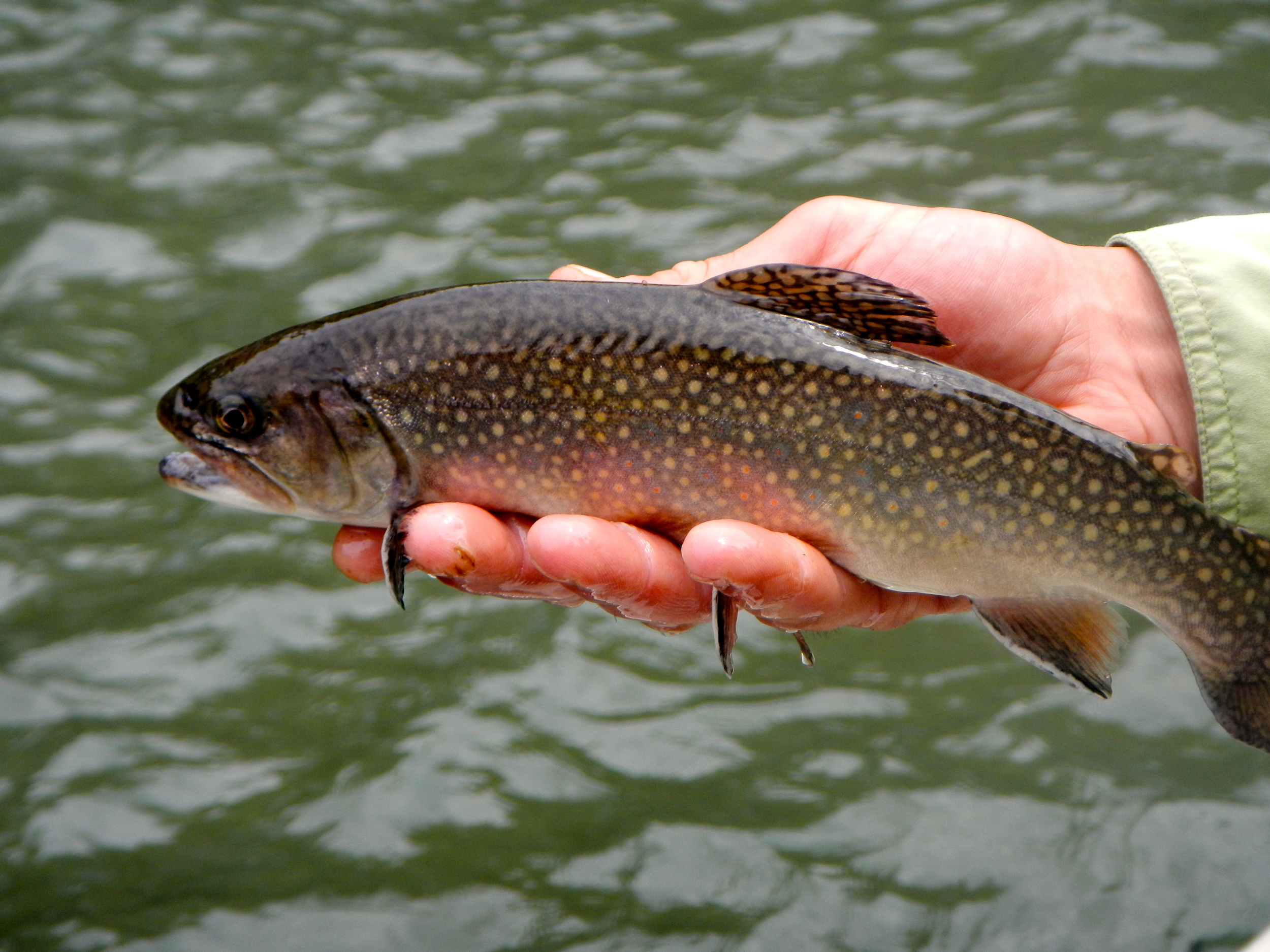 Fish from the 3-acre stocked pond or Trophy Trout Waters of the Catawba.