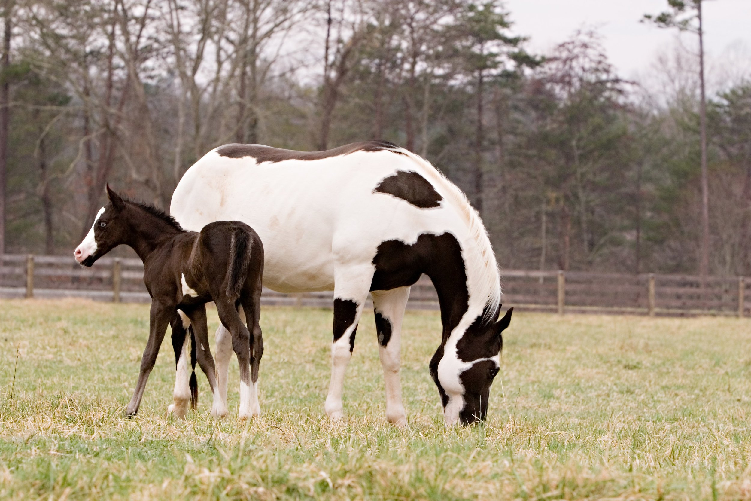 Horse and young foal at Catawba River Club Stables.