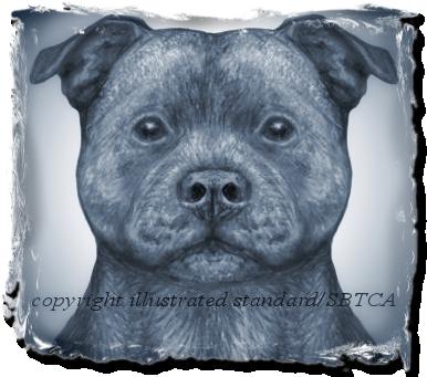 Staffordshire Bull Terrier Club of America - Correct Dog Head