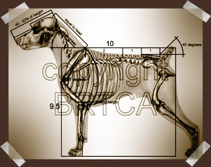 BRTCA measurements as called for in Breed Standard