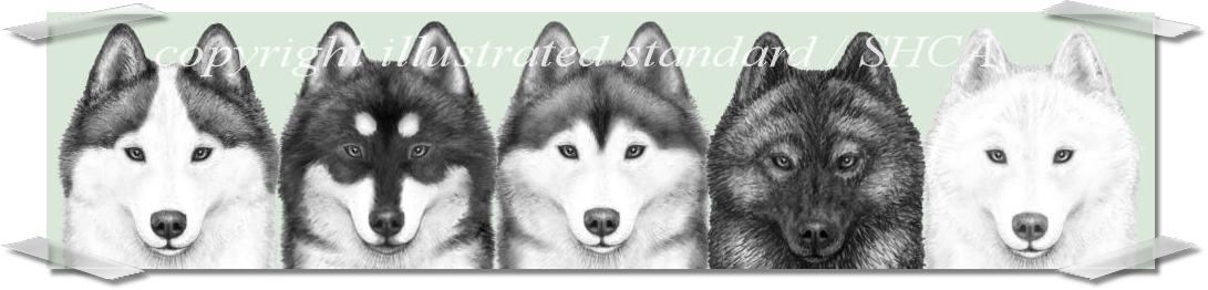 Siberian Husky Club of America - Illustrated BreedSTandard Drawings in Pencil with shaded OVerlay Demonstrating Different markings and Coat Color on the Same Dog head
