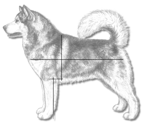 Measurement Overlay in the Alaskan Malamute - AMCA Illustrated Standard
