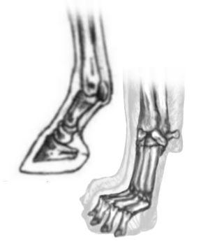 dog-horse foot.jpg
