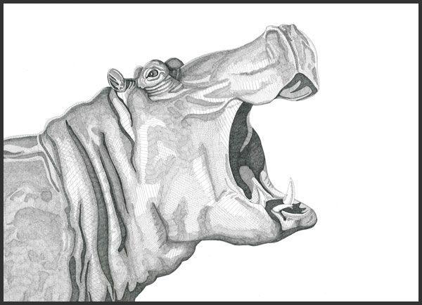 Hippo, 2016