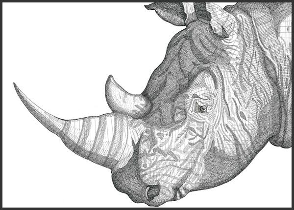 Rhino, 2010