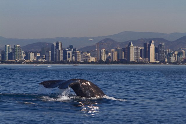San Diego private whale watching tours