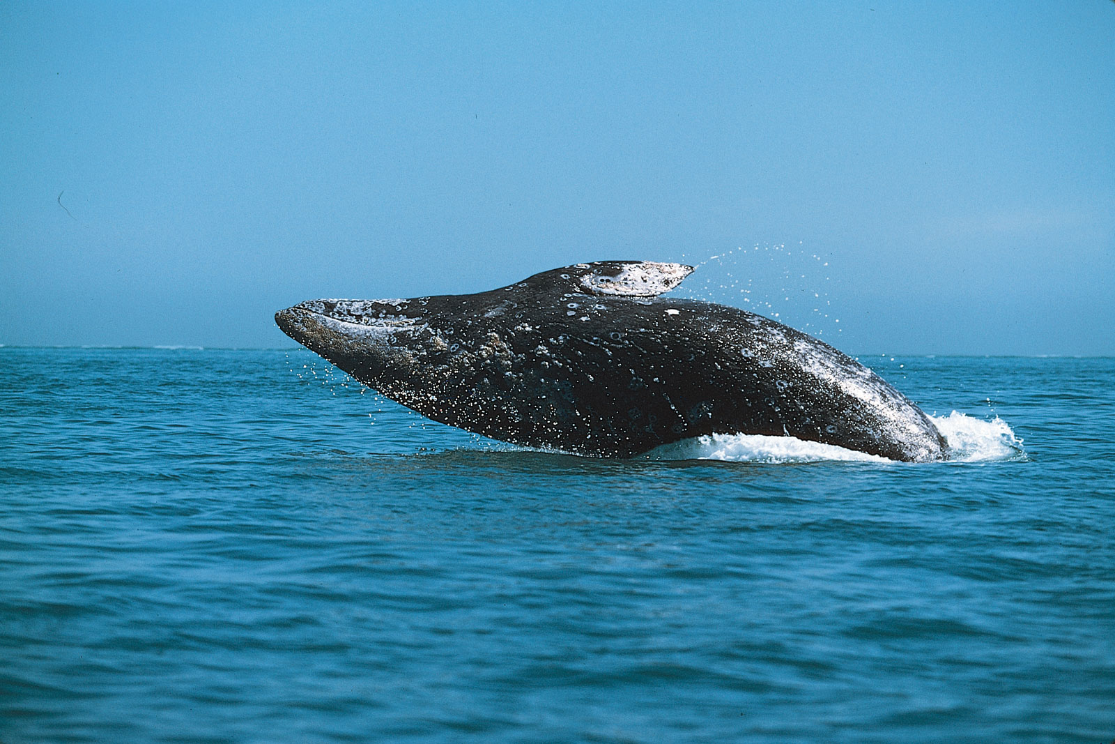 Private whale watching charters aboard Mai Tai San Diego Yacht Charters