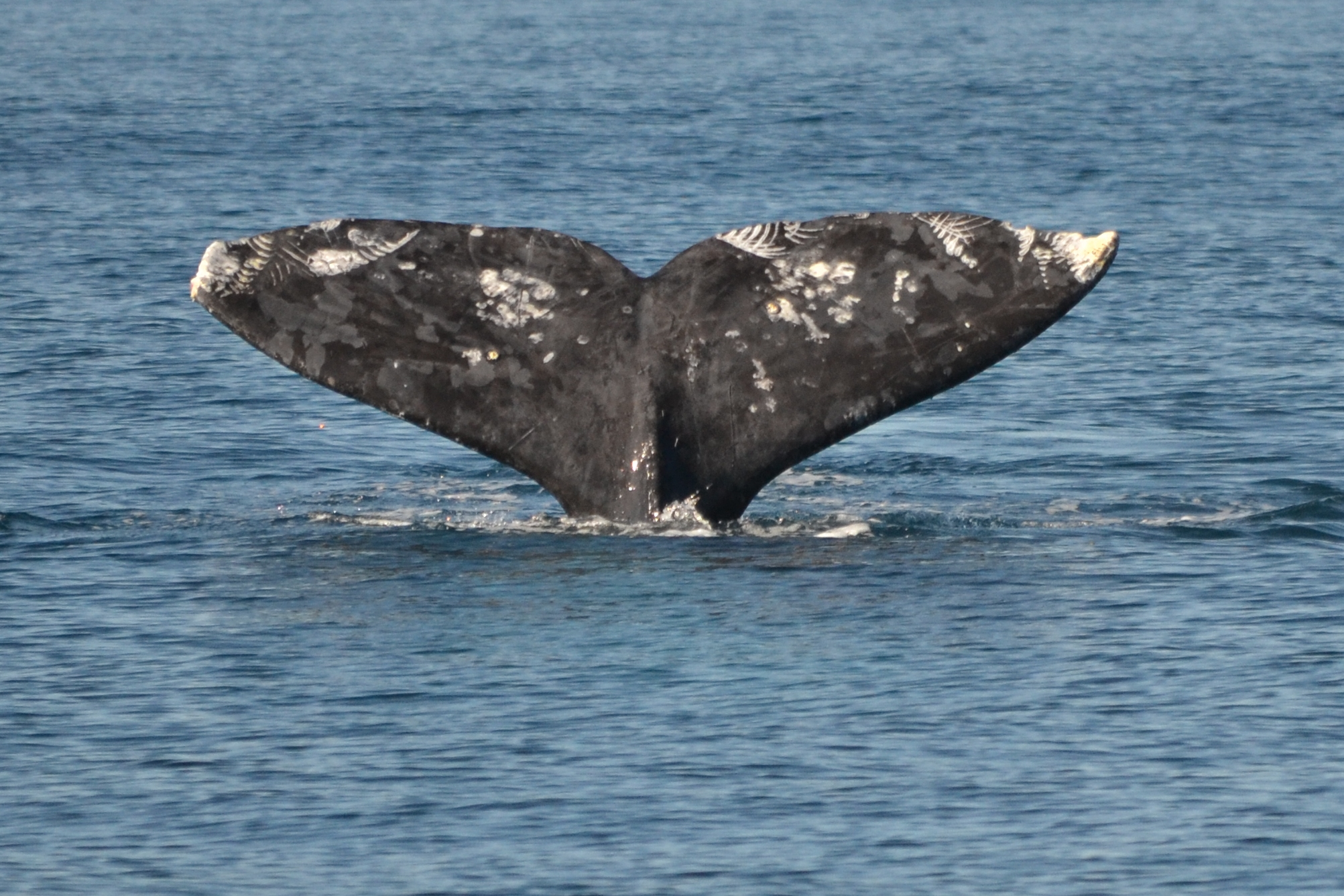 San Diego Whale Watching adventures