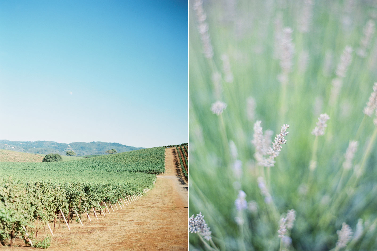 Kunde winery wedding photos California