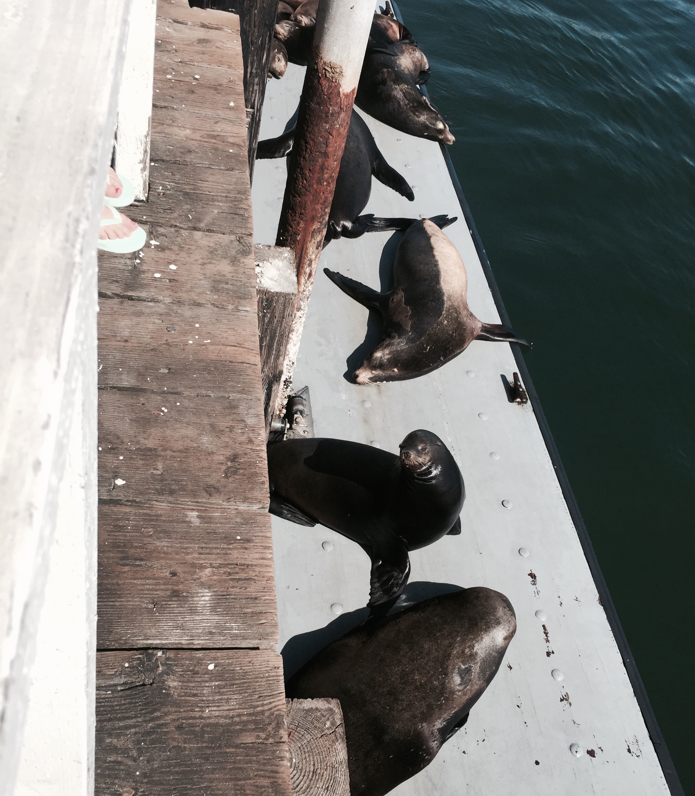 Sea lions cheered me on after a four mile run down the wharf.