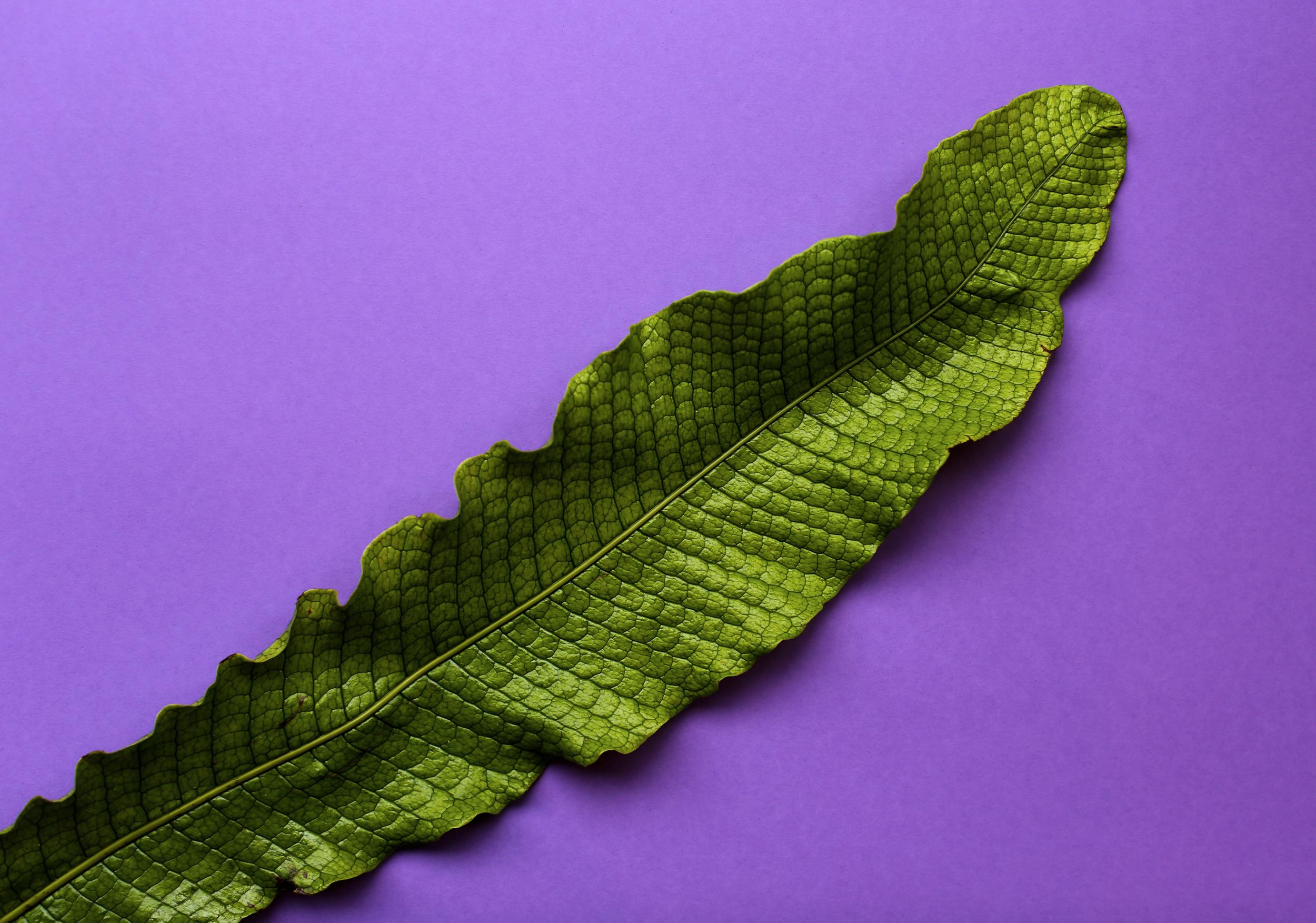 PARKDELI_leaf.jpg