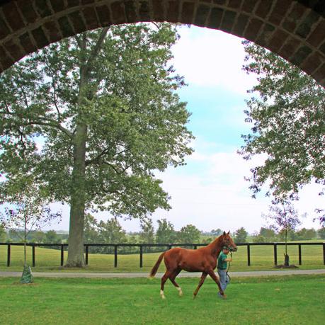 Runnymede Farm