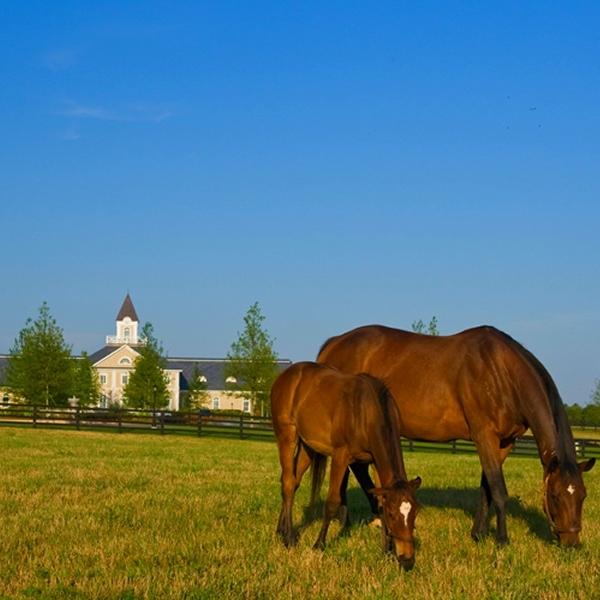 Adena Springs Farm