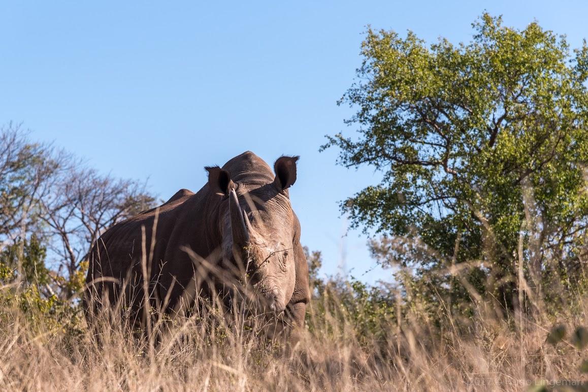Rhino Walk.jpg