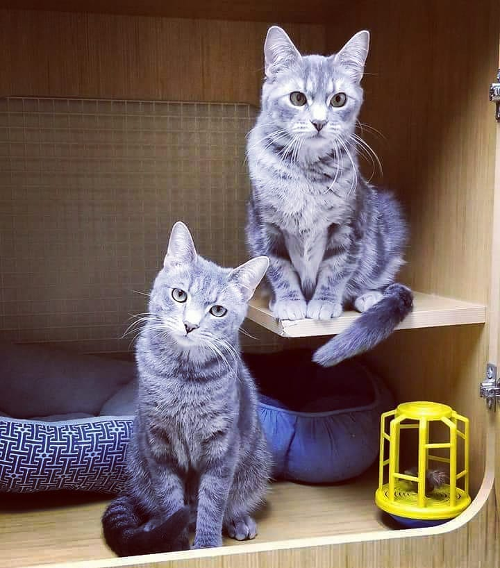 Benjamin Button - Adopted! & Betty