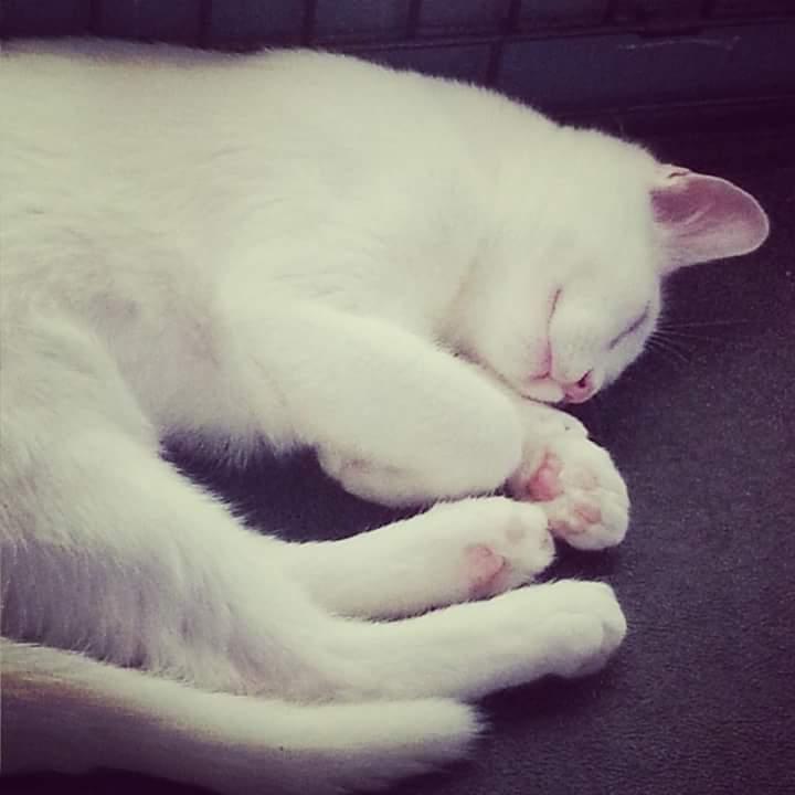 Phoebe - Adopted!
