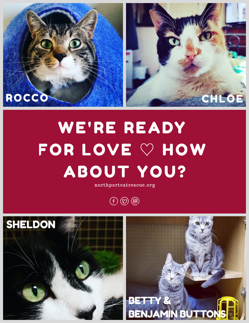 Please click here to see our cats available for adoption on Petfinder.