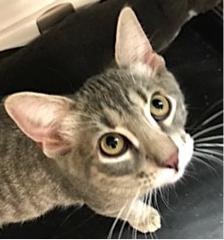 Tic - Adopted September 2018