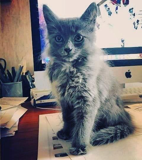 Izzy - Adopted November 2018