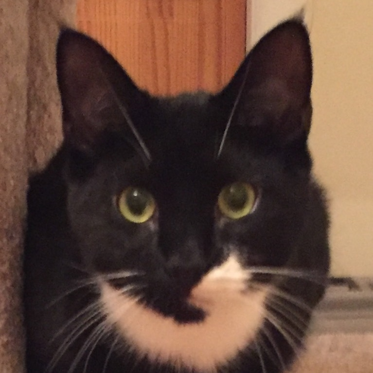 all about BRuno - Bruno is a sweet boy. He was found in Huntington Station with his brother Drake. He loves to be brushed and ear & belly rubs. Bruno can be visited at Petco in Huntington. Born September 2017FIV/FELV tested negative,Vaccinated, Neutered,Microchipped.