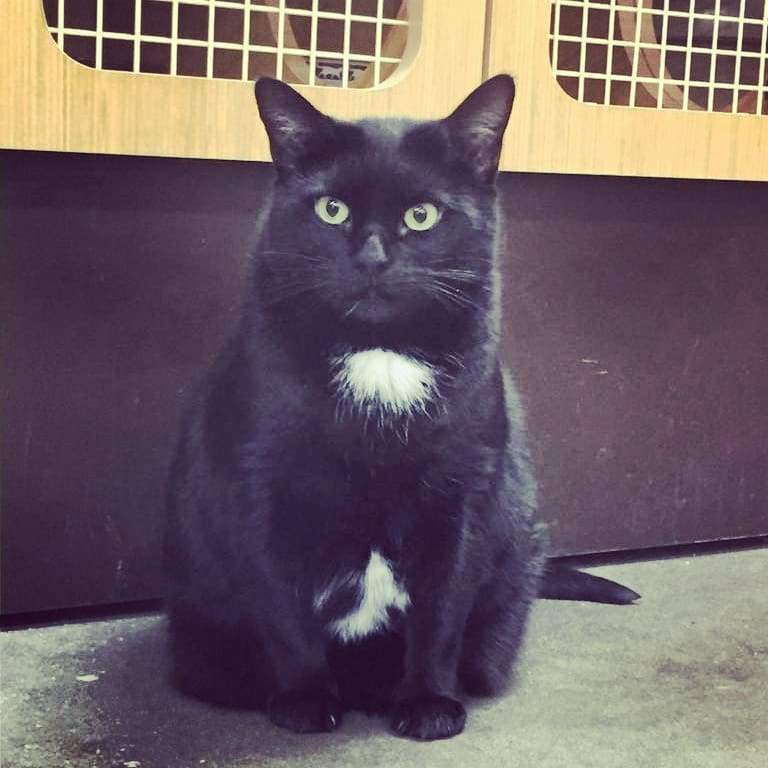 Layla Adopted February 2018