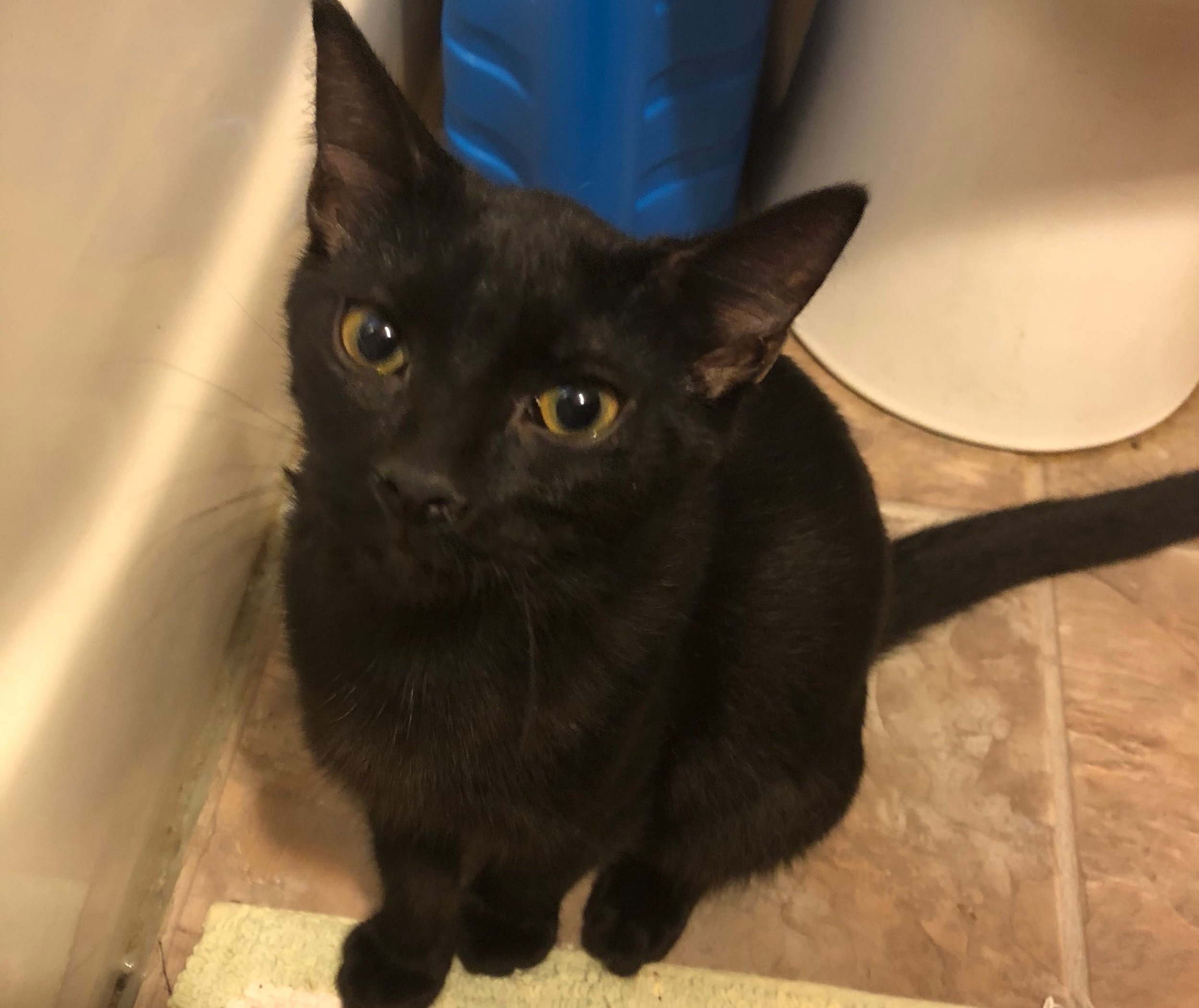 Midnight Adopted February 2019