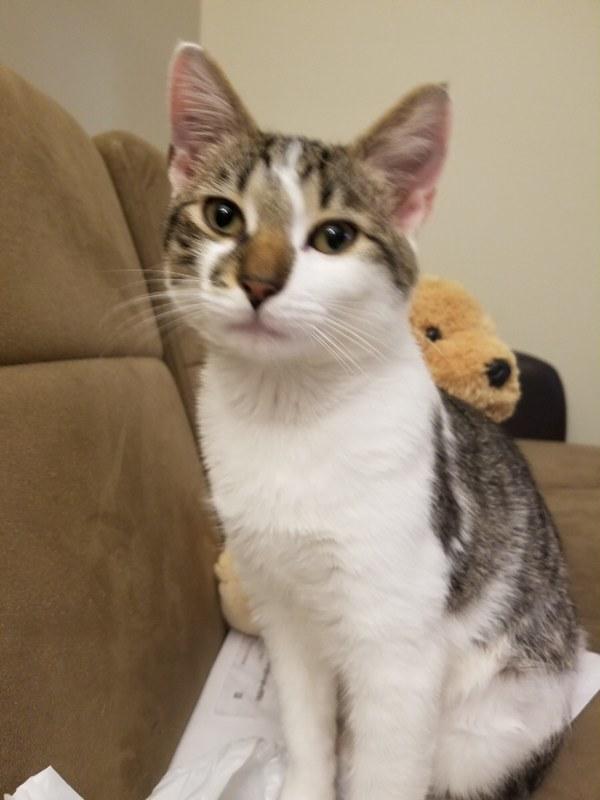 Prince Simba Adopted June 2019