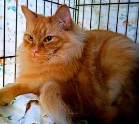 Leo Adopted June 2019