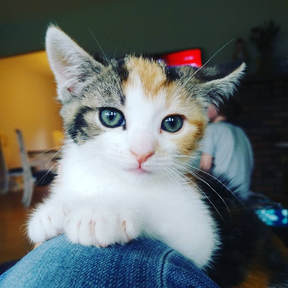 Trixie Adopted August 2019