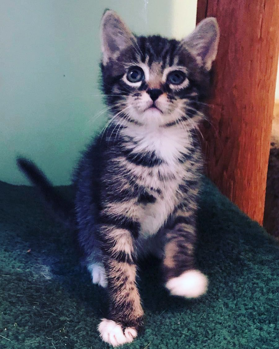 John Snow Adopted August 2019