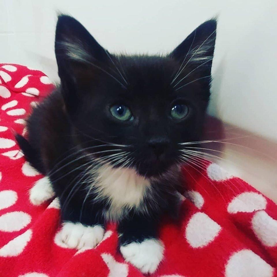 Yin Adopted September 2019
