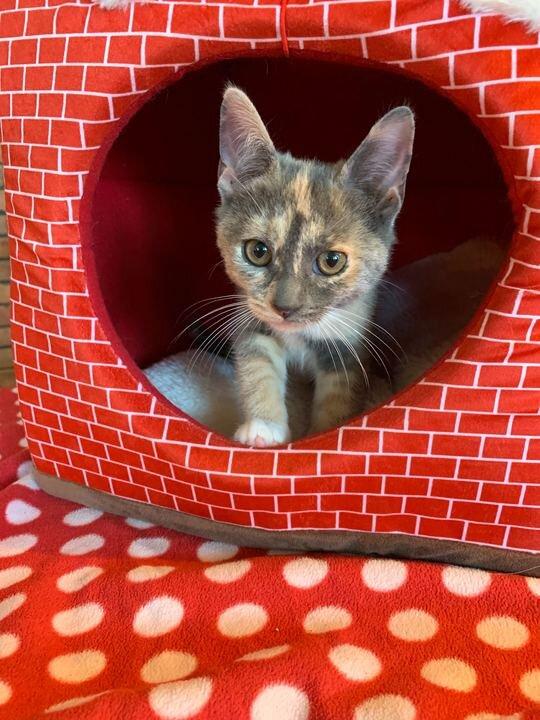 Callie Adopted September 2019
