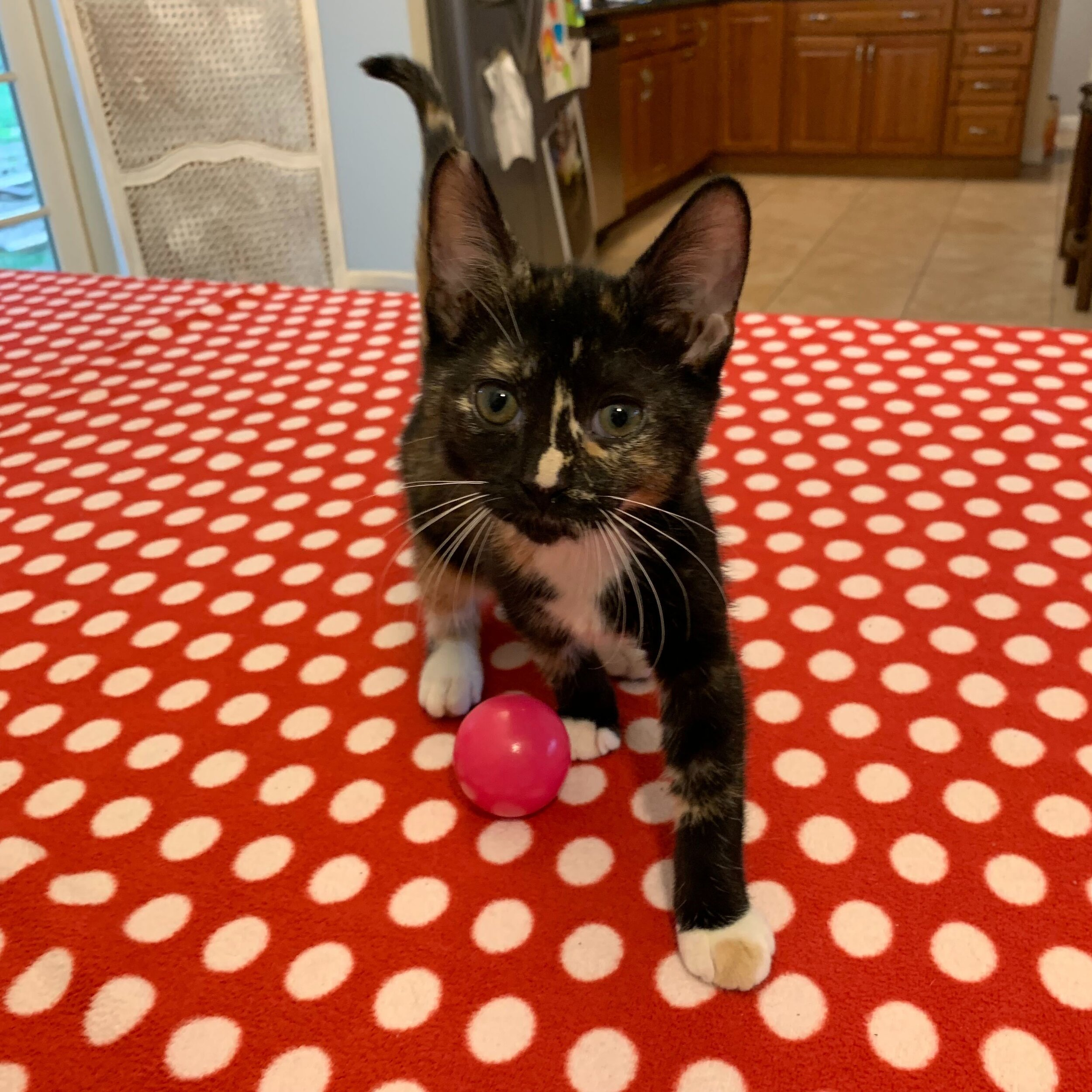 Mocha Adopted September 2019