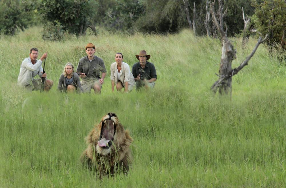 Walking Lions 938439439 copy.jpg