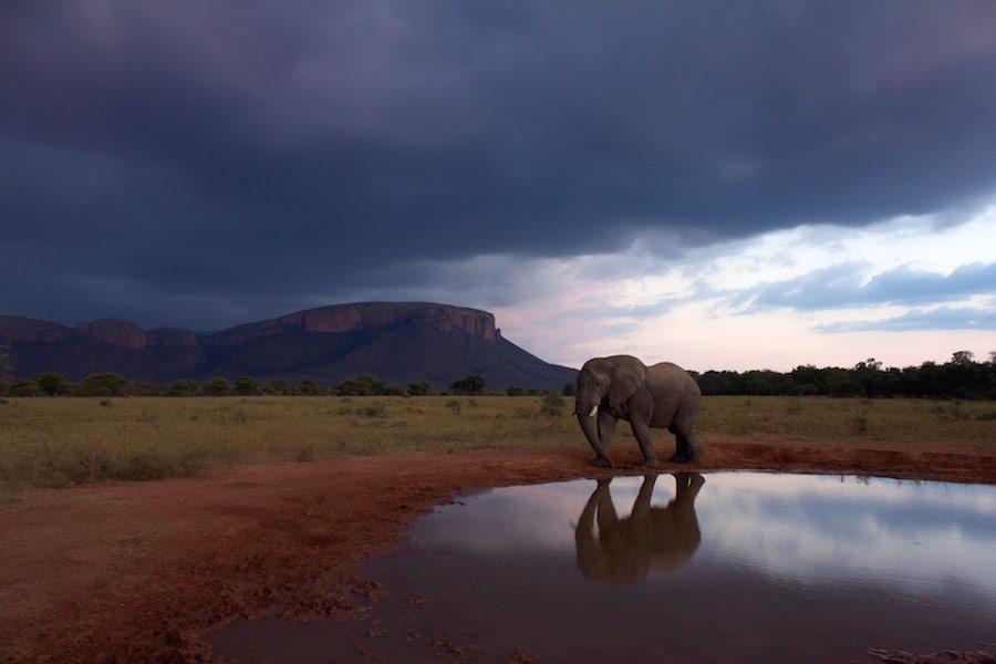 safariwildlifeelephant1-141031 copy.jpg