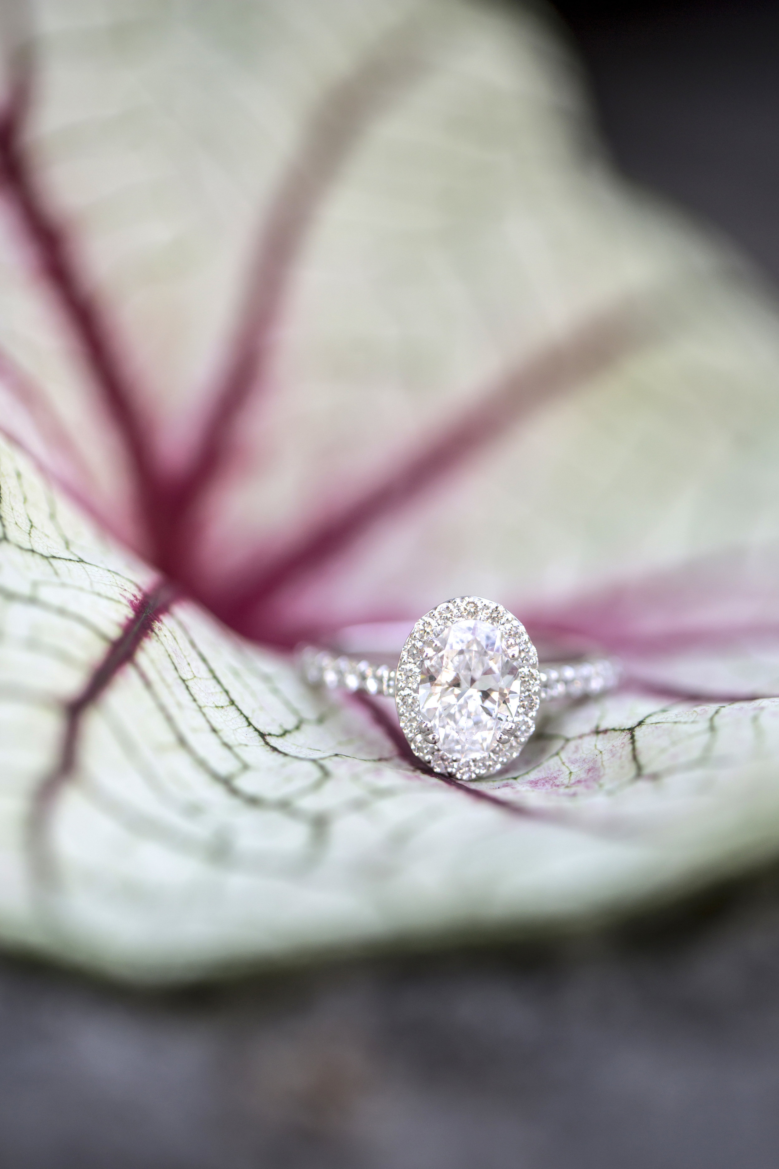 Rebecca_K_Clark_Photography_Engagement_Gallery_Web-13.JPG