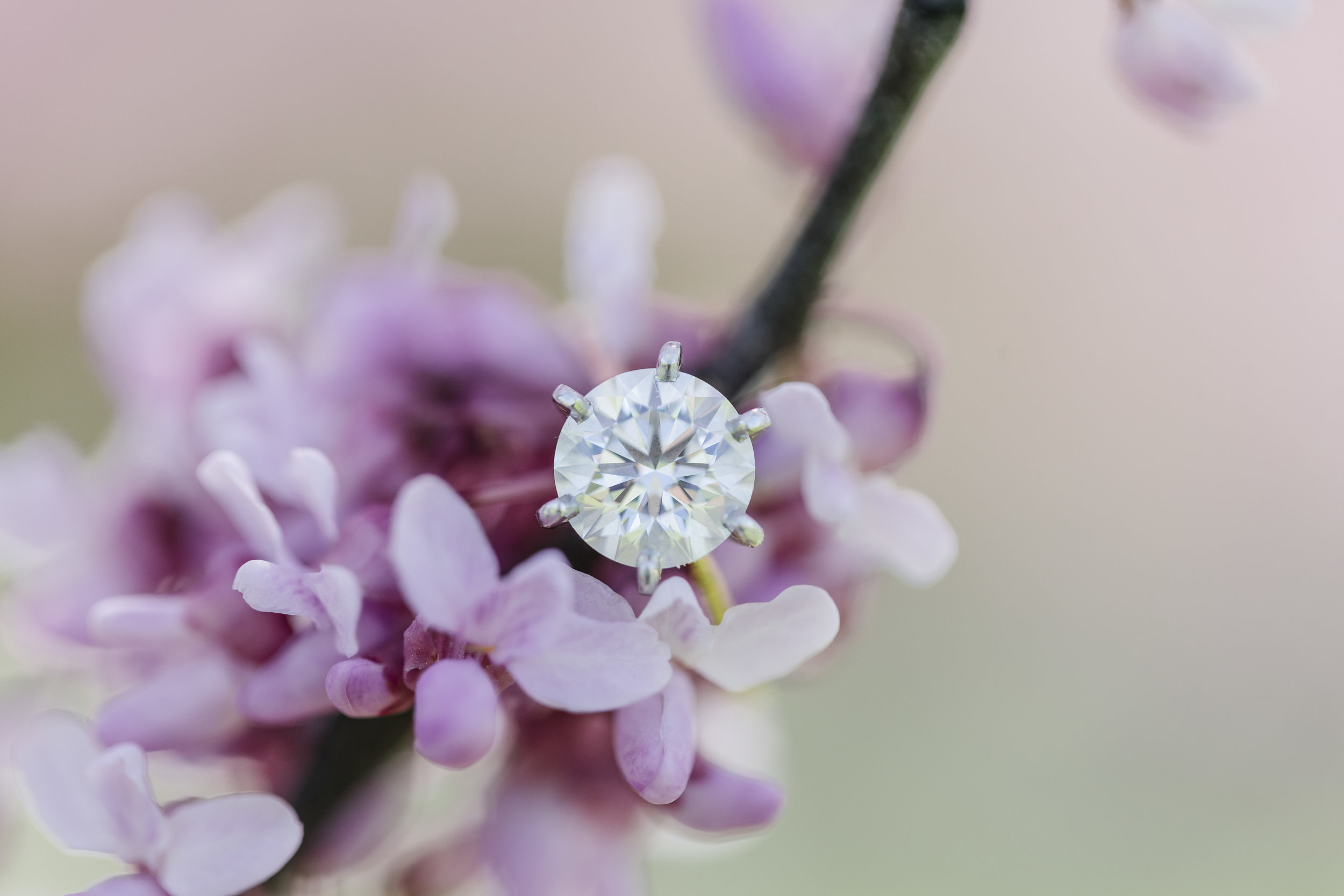 Rebecca_K_Clark_Photography_Engagement_Gallery_Web-37.JPG