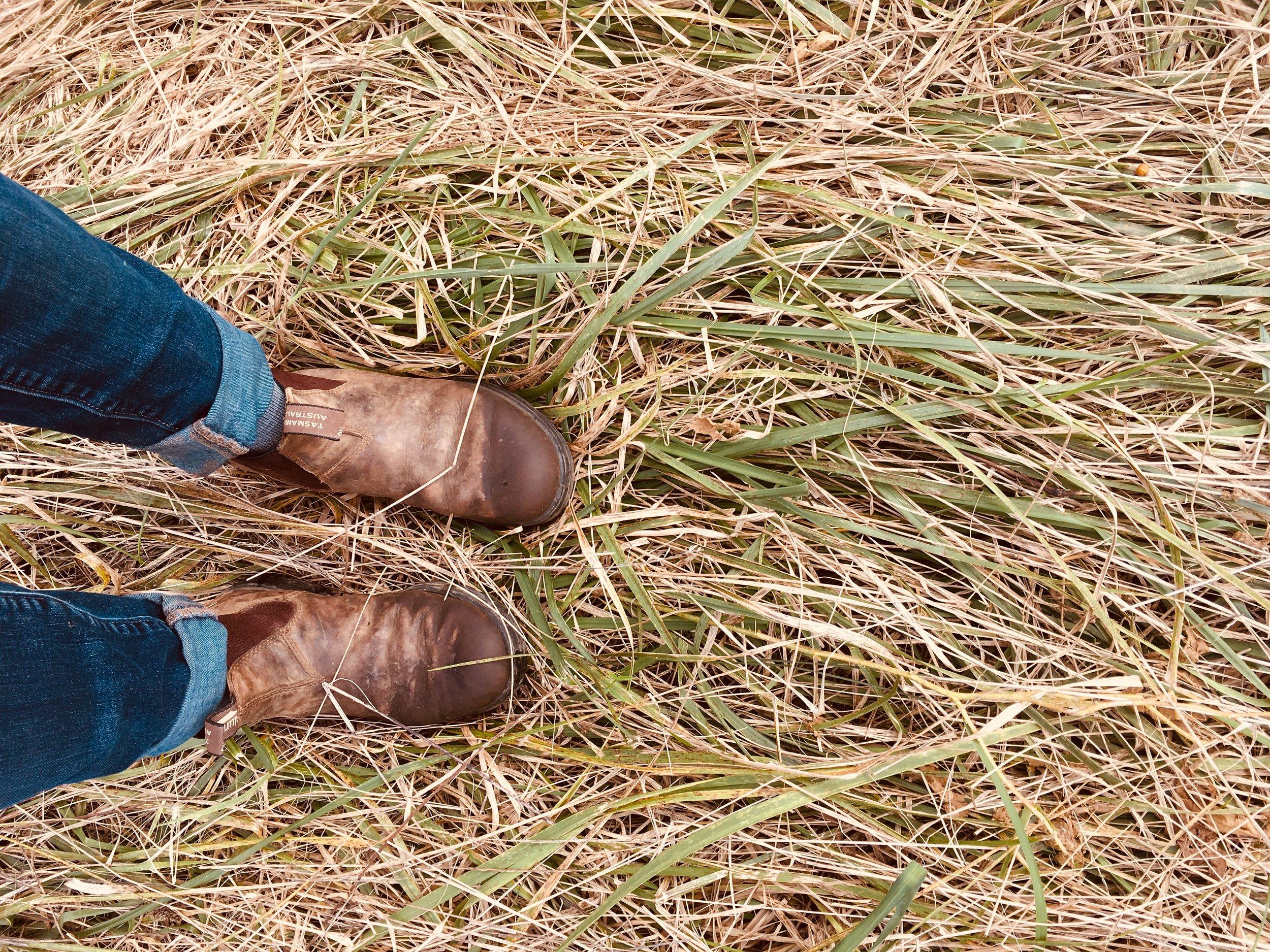 boots on grass.JPG