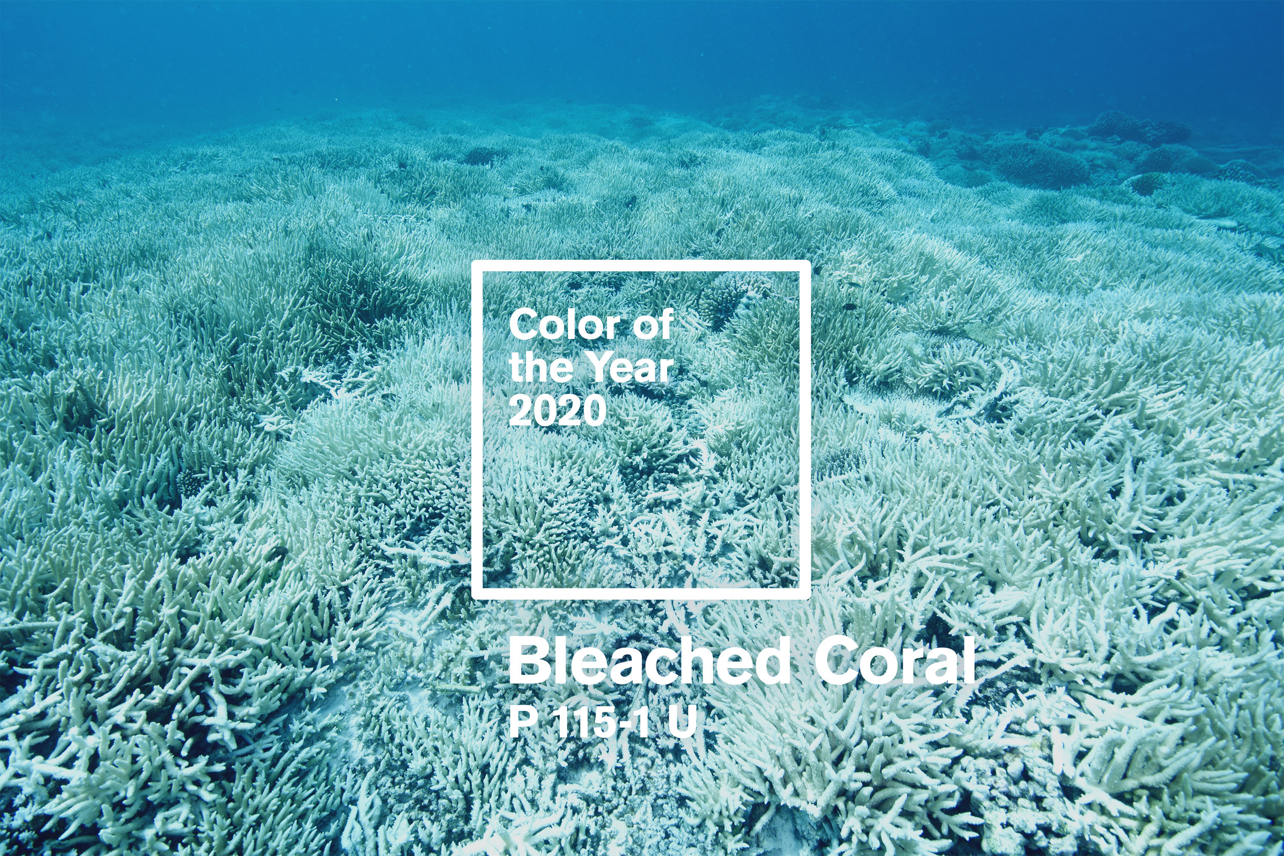ColorOfTheYear2020-Image.jpg